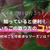 イチゴ狩りの取り方のコツは?逃したくない最適な期間(関東/関西)