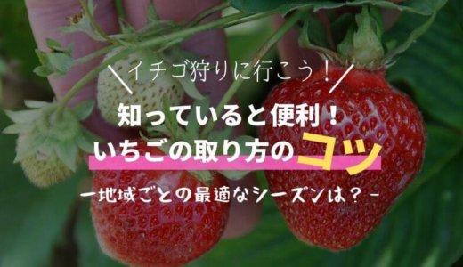 イチゴ狩りの取り方のコツは?逃したくない最適な期間(関東/関西)!